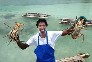 Lobsterman on Anegada